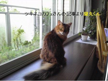 探している猫写真3