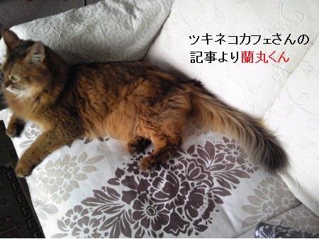 探している猫写真4