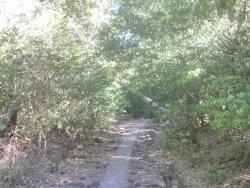 s-霧島山 韓国岳登山 (4)