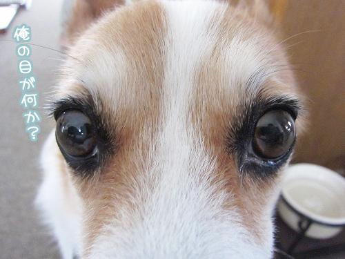 俺の目が何か?