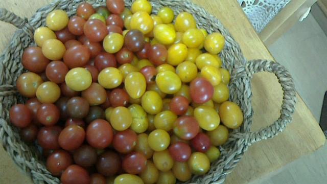 2プチトマト
