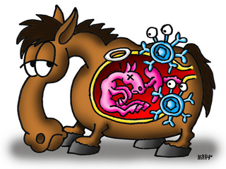 20150821_Blog1_Equine_Herpesvirus_Abortion_Pict1.jpg
