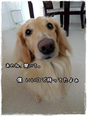 miokuri3.jpg