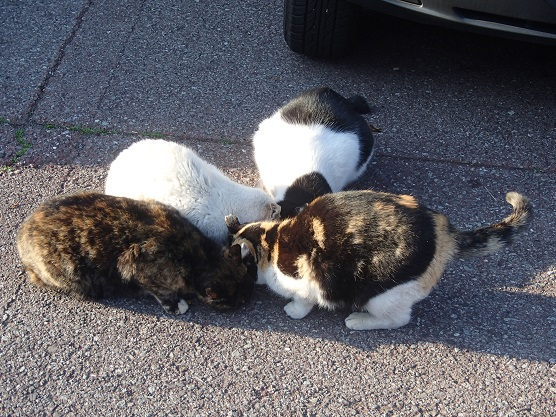 駐車場猫軍団