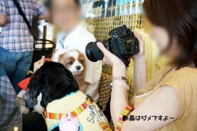 blog_DSC06689.jpg