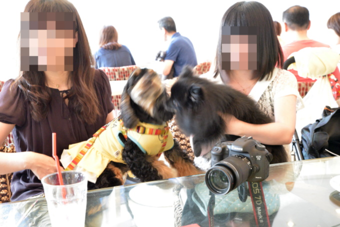 blog_DSC_4952.jpg
