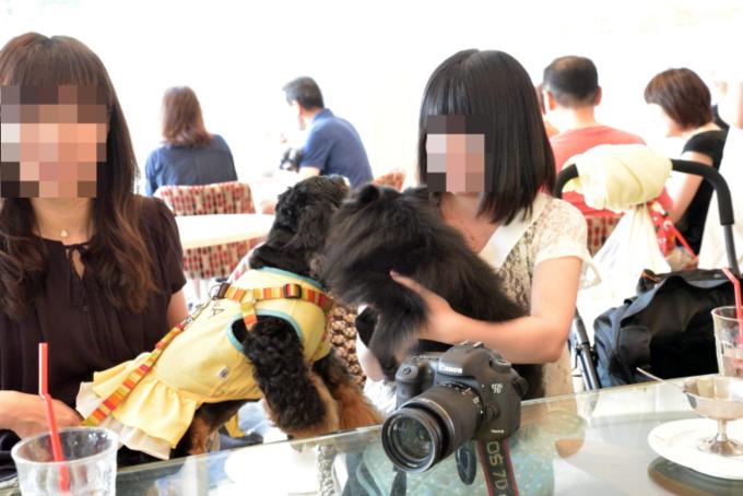 blog_DSC_4953.jpg