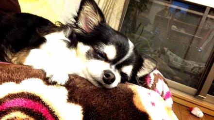 眠るチマさん