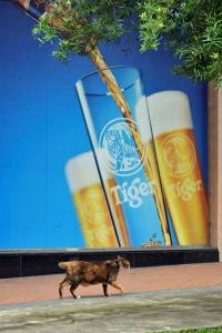 Cat and Tiger Beer Ad, Singapore