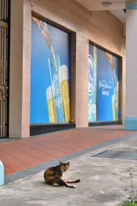 Cat and Tiger Beer Ad