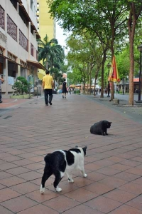 Singapore Street Cats
