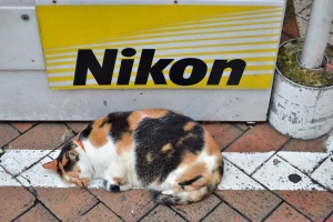 Fat Cat of Singapore (Nikon sales assistant)