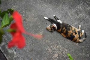 Fat Cat of Singapore