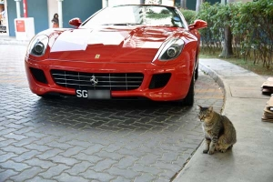 Singapore Cat and Ferrari