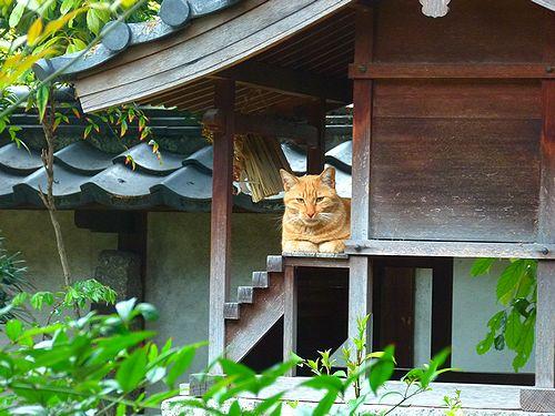 chichibi2_2015073021062514a.jpg