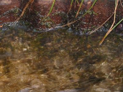 不明蘚類の生育状況