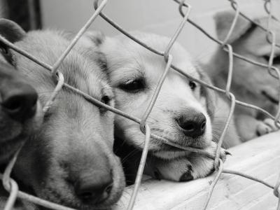 o-SAD-DOG-facebook.jpg
