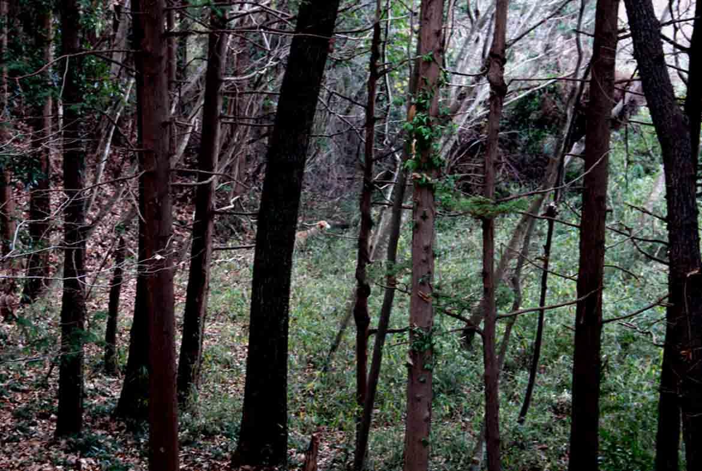 冬日の裏山で (7)