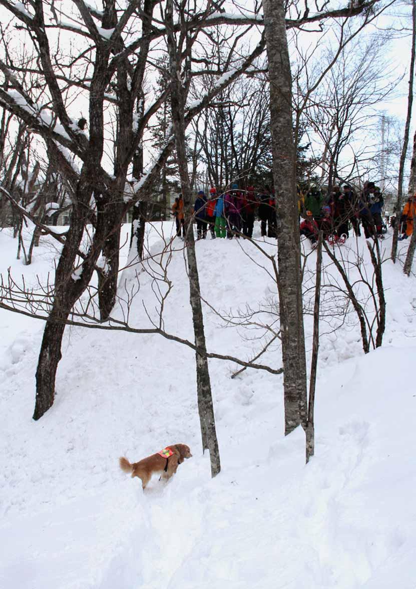 2015年 全国雪崩 (2)