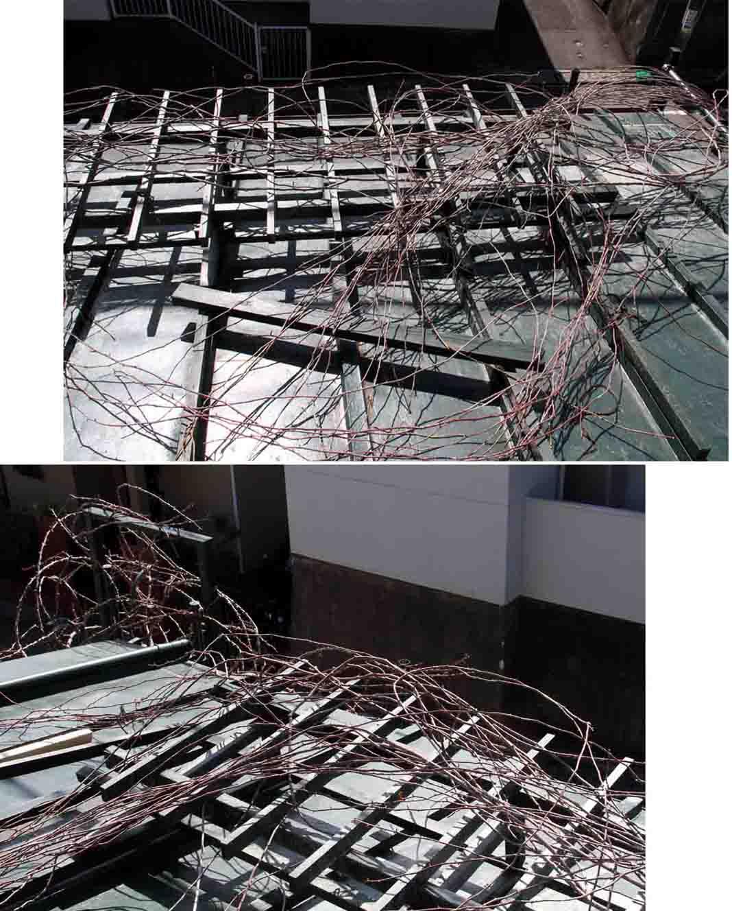 屋根の上のFジュランビル(2)