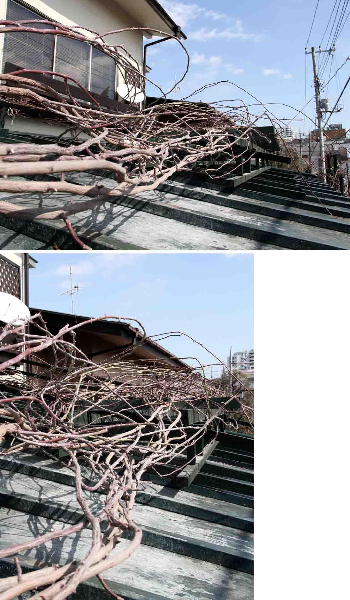 屋根の上のFジュランビル(3)