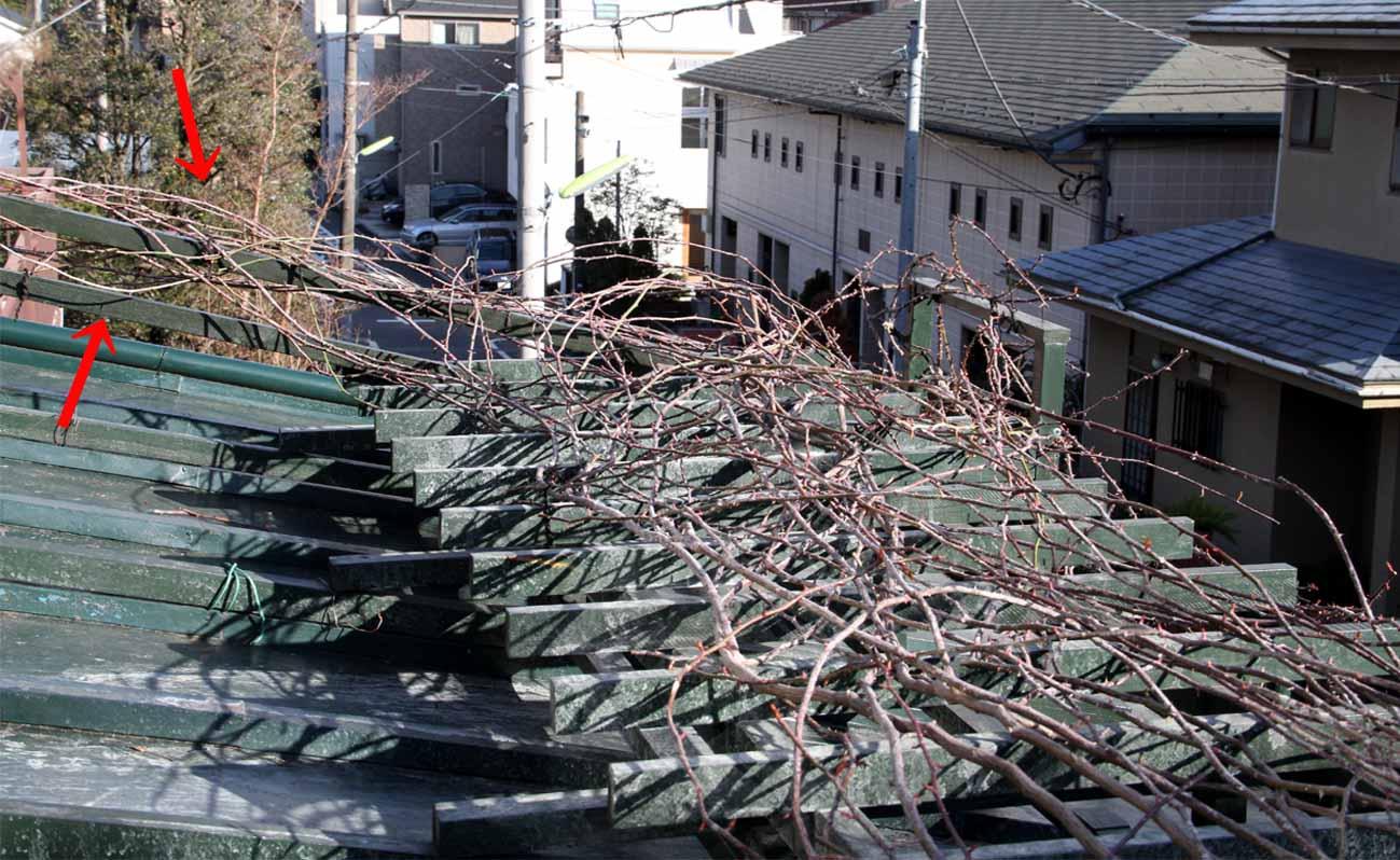 屋根の上のFジュランビル(5)