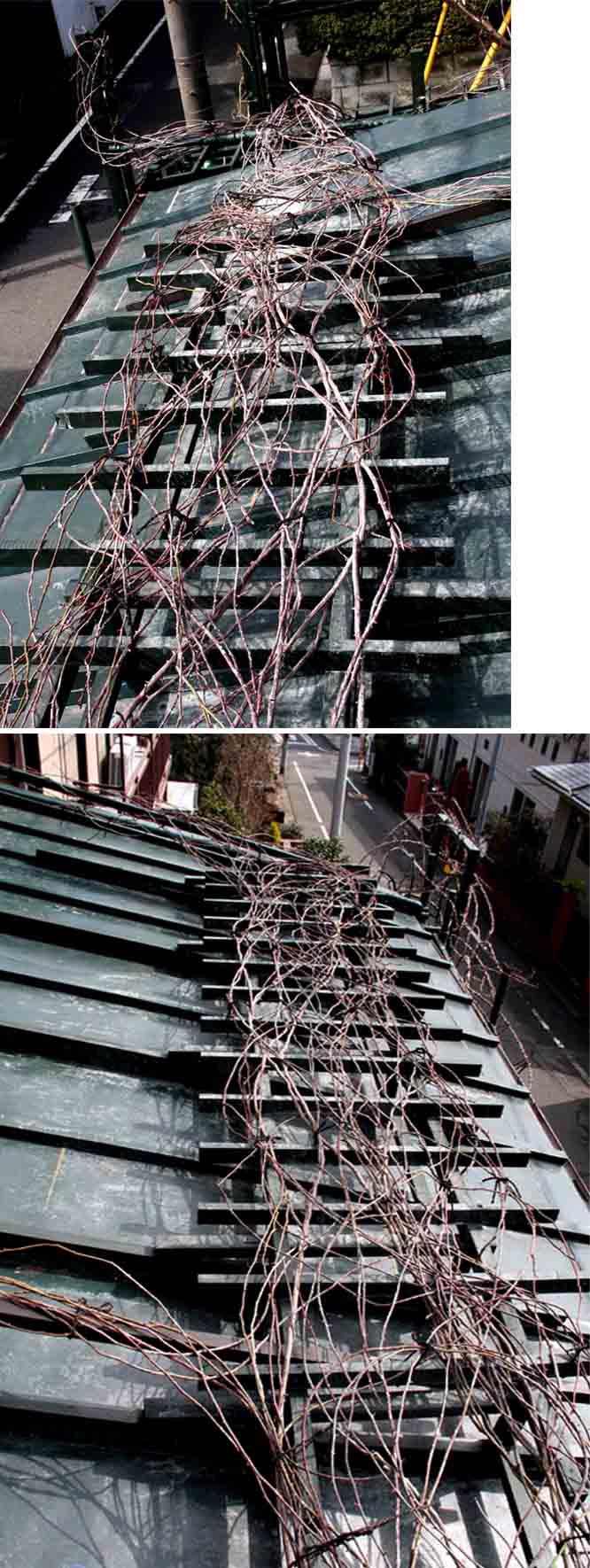屋根の上のFジュランビル(10)
