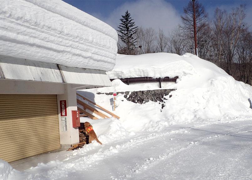 2015年 全国雪崩 (14)