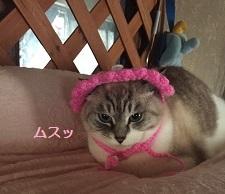 お嬢20141224213230