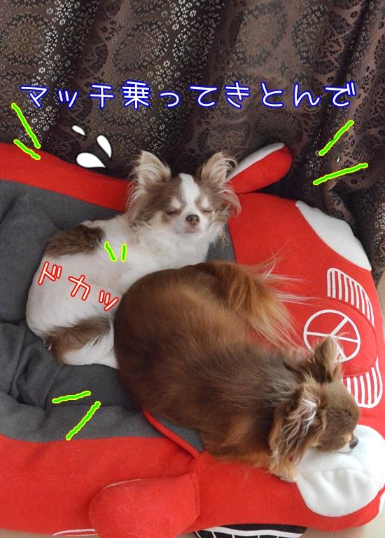 DSC_1248_201507302154131ab.jpg