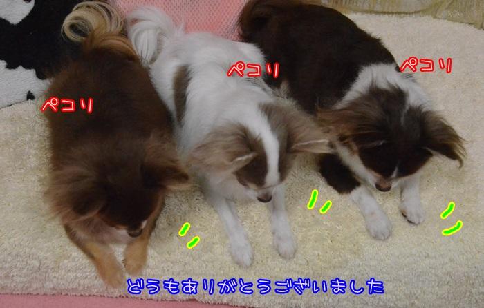 DSC_8383_20141230212030d73.jpg