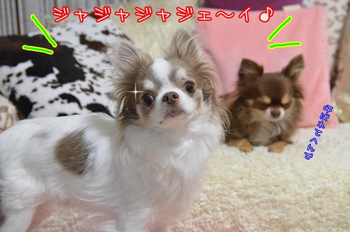 DSC_8564_201501072108297de.jpg