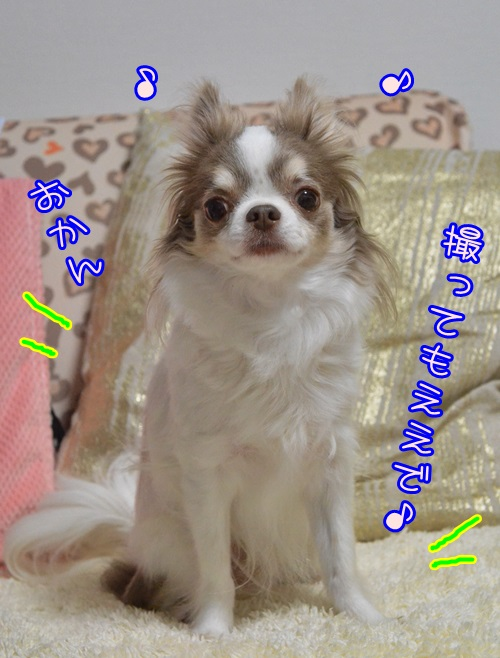 DSC_8566_20150107210830b13.jpg