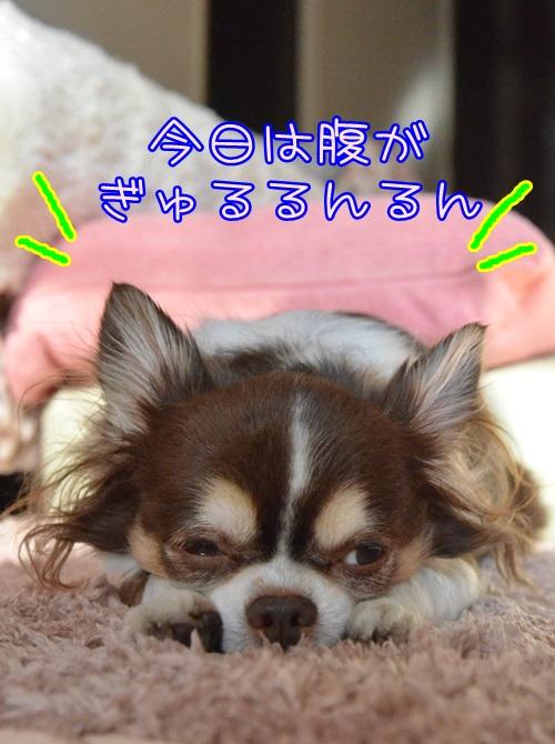 DSC_8609_20150202172134323.jpg