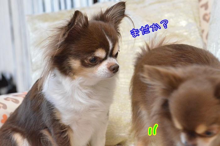 DSC_8680_20150123152617a2d.jpg