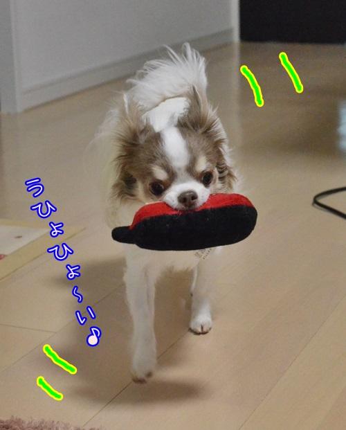 DSC_8752_2015012614251239e.jpg