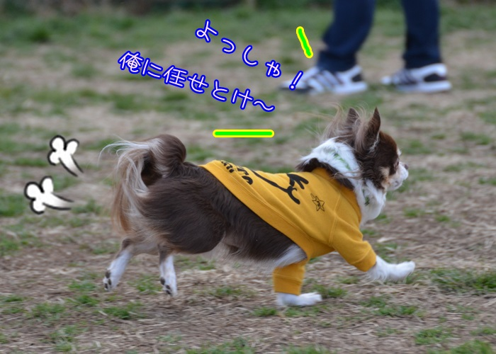 DSC_8832_20150130153715319.jpg