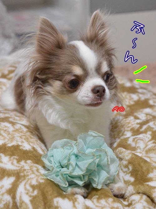 DSC_8994_20150209205433f47.jpg