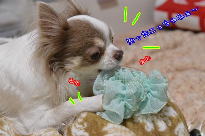 DSC_8997_2015020920543713a.jpg
