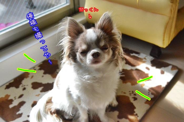 DSC_9315_20150221194921c2c.jpg