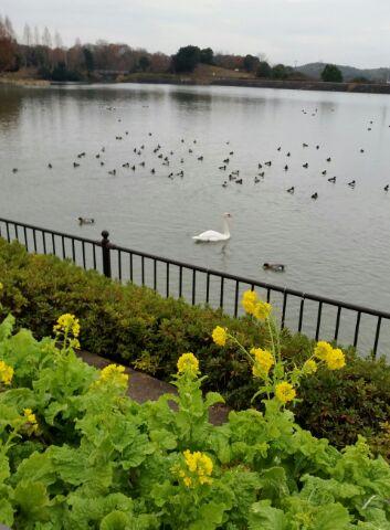 蜻蛉池公園池20141228