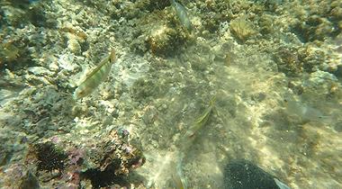 集合する魚