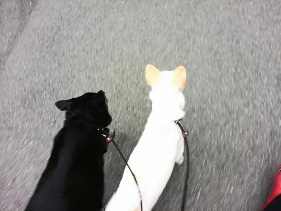 オセロと散歩