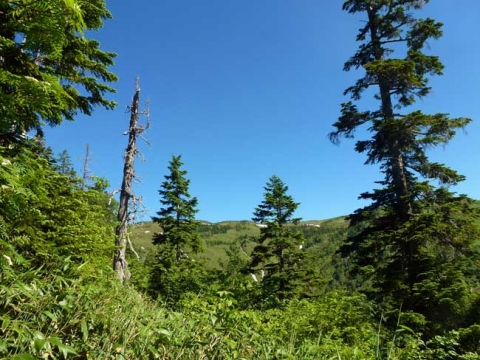 森林限界で駒ヶ岳が見えてくる