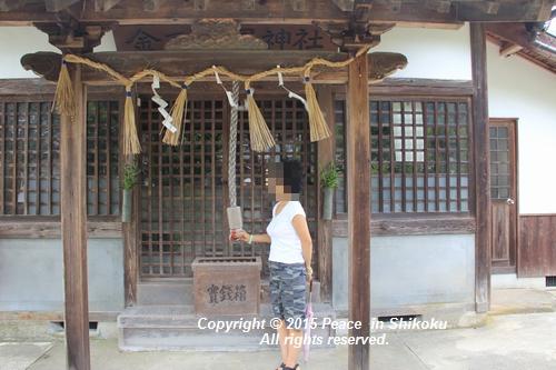 himawari-0713-5376.jpg