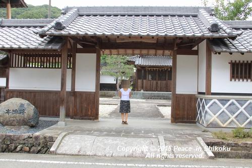 himawari-0713-5381.jpg