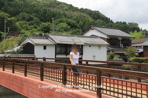 himawari-0713-5402.jpg