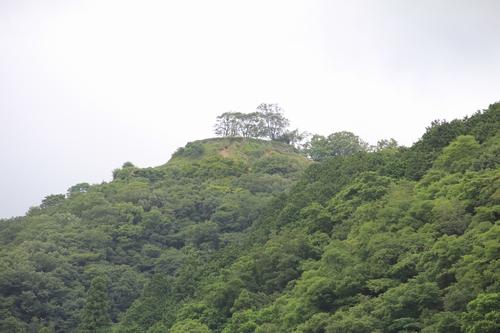 himawari-0713-5462.jpg