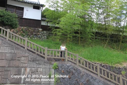 himawari-0713-5468.jpg