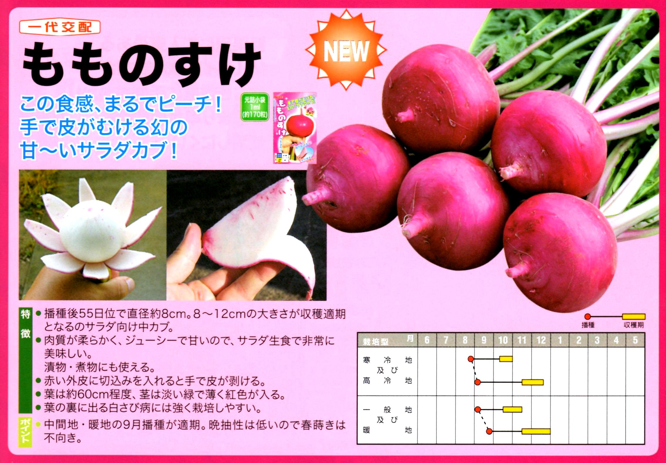 momonosuke-panf3.jpg